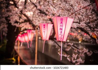 "MEGURO, TOKYO / JAPAN - APRIL 2 2017 - It is a lantern of Meguro River Sakura Festival. The meaning of lantern's non-English characters is written as ""Meguro River Sakura Festival""."