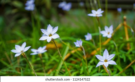 Six Petals Stock Photos Images Photography Shutterstock