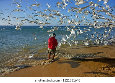 Meia Praia, Lagos, The Algarve, Portugal, June, 16th, 2018, lone fisherman pulling in the net full of sardinhas, or sardines surrounded by a flock of hungry seagulls.