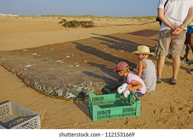 Meia Praia, Lagos, The Algarve, Portugal, June, 23rd, 2018, inquisitive children looking at the catch of the recently landed net of sardinhas, or sardines.