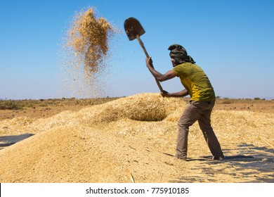 Mek'ele, Tigray, Ethiopia 11/29/2017. Man fanning wheat, separating the wheat from the chaff.