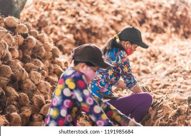 Mekong Delta, Ben Tre, Vietnam - October 21, 2016. Coconut flesh being extracted from the shells by female workers. Details of a coconut candy workshop, one of the popular industries in Mekong Delta.