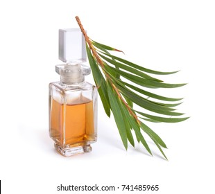 Melaleuca (tea tree) essential oil with twig. Isolated on white background.