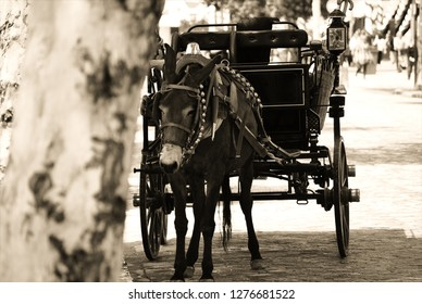 a melancholic mule tied to a tree, with the carriage