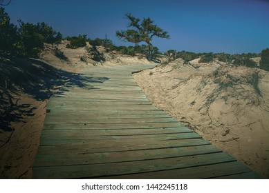 Melancholic view of a wooden walkway on a sunny sandy beach in Crete with a view of lonley tree on a blue sky background