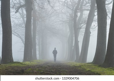 Melancholy emotions concept: man walking alone in a lane of trees on a foggy, spring morning.
