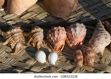 Melanesia, Papua New Guinea, Bismarck Sea area, Tuam Island, Tuam village. Large souvenir seashells for sale.