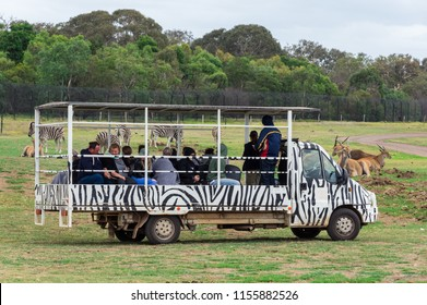 Melbourne, Australia - February 25, 2018: safari bus taking visitors through Werribee Open Range Zoo in outer suburban Melbourne. Buses take visitors right up to African wild animals.