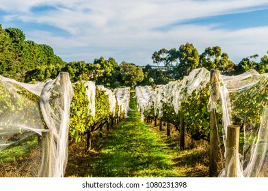 MELBOURNE, VIC / AUSTRALIA - 07 APR 2018; Vine estates on Mornington Peninsula