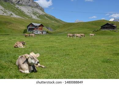 Four Cows Images, Stock Photos & Vectors | Shutterstock