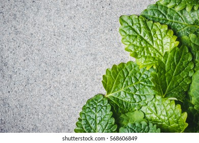 Melisa, lemon balm green leaves on gray rough surface.