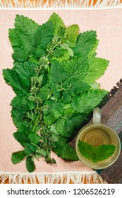 Melissa. Herbs for use in alternative medicine, phytotherapy, spa, herbal cosmetics. Preparing infusions, decoctions, tinctures. Used in powders, ointments, butter, tea, bath