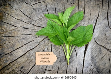 Melissa officinalis,lemon balm on old wooden background.