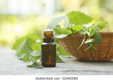 melissa oil container on wooden and greenery background with melissa leaves on greenery background
