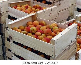 mellow apricots stacked in wooden stiles
