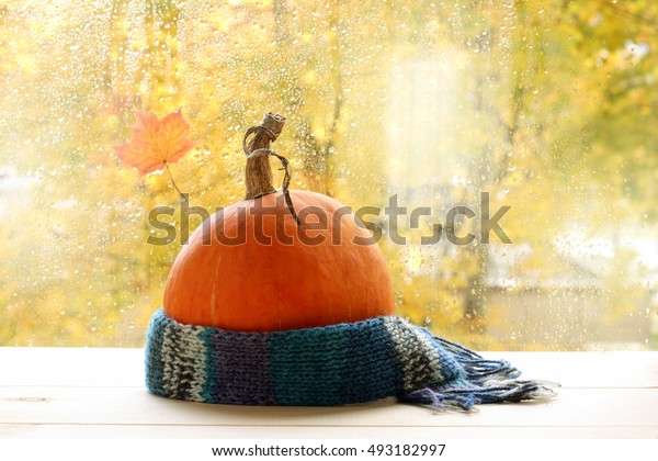 mellow orange pumpkin wrapped in a warm scarf on the background of drops after rain / autumn weather outside the window