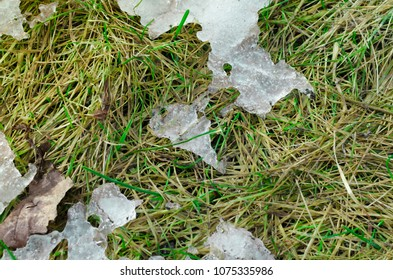 Melting snow on a spring grass under the sunlight.