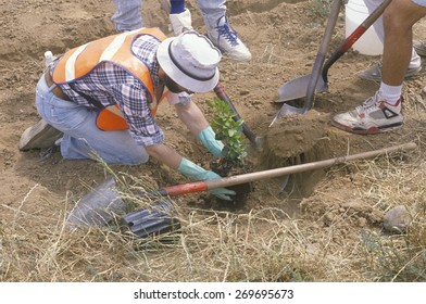 A member of the Clean & Green environmental group of the Los Angeles Conservation Corps plants a tree in a hole dug by another worker