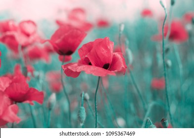 Memorial day background with wild poppy field and copy space