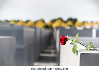 Memorial to the Murdered Jews of Europe, Berlin, Germany. Lonely Rose Flower