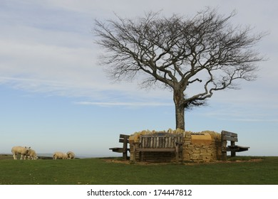 The Memorial Wall on Cleeve Common with a Beech Tree in its middle. A site of Special Scientific Interest, close to Cheltenham in the Cotswolds.