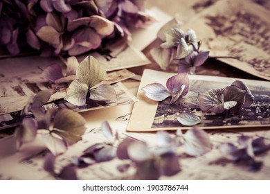 Memories - old and antique family photos  dated to 1930 with old photo album and music notes with dried flowers in vintage style