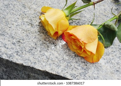 Memory of the dead. Two yellow roses on a gravestone