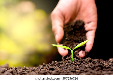 Men hands are planting the seedlings into the soil, ecology concept.