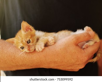Men is holding little red kitten
