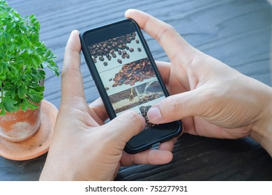 Men looking coffee beans in mobile phone on wood table at cafe