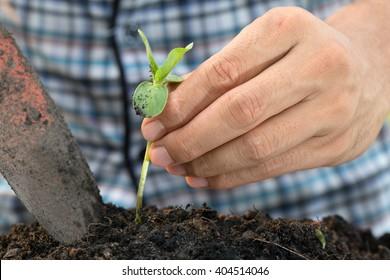 Men are planting sapling tree.