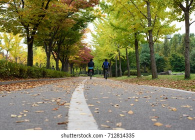 Men riding bicycle on bike lane in the park with colorful autumn leaves and fallen leaves on ground, autumn landscape, Ilsan park, Korea