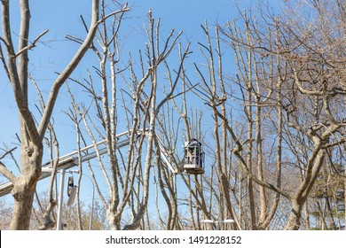 Men in winter clothes cuts off a tree branches with a chainsaw, standing on aerial work platform, view from the back