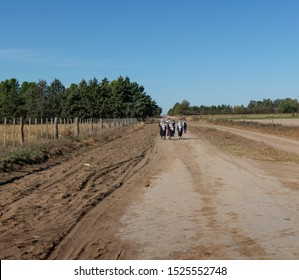 Mennonites, Amish. Children go to school on rural roads.          The immigration of German-speaking Mennonites to Argentina began in the years 1985 to 1987, from Mexico, Belize, Paraguay and Bolivia.