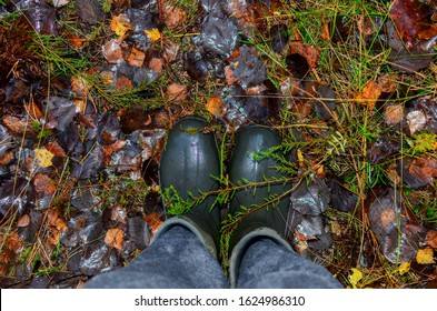 Men's feet in rubber boots on a background of wet green in the forest. Rain footwear for men or woman. Wellington boots for huntrer or fishing. Pair of wellies in autumn. Waterproof Hiking Boot