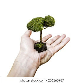 Men's hand holding a sapling tree isolated on white background