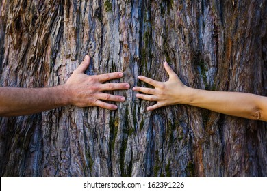 Men's and woman's hands hugging a tree