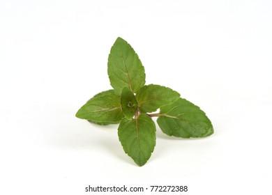 Mentha Piperita leaves have medicinal properties.