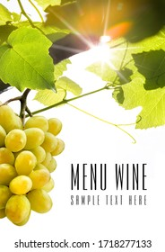 Menu wine design - isolated text, sample text