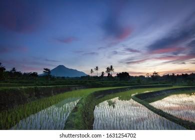 Merapi and Rice Field - Yogyakarta, Indonesia