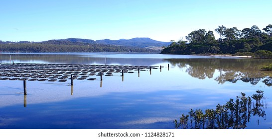 Merimbula lake oyster farm, the far south coast on NSW produces some of the best in the country, oysters from Meribula can be found in the best restaurants in Australia