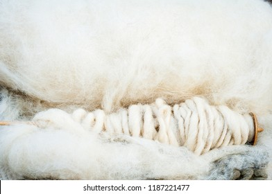 Merino's sheep wool on a spinning wheel