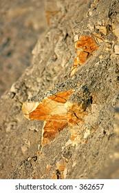 Merl rock