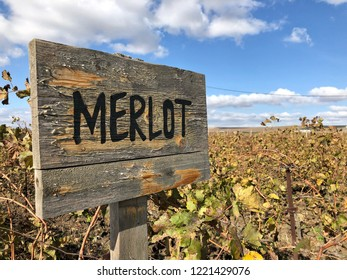 merlot sign in a vineyard