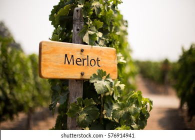 Merlot wine sign