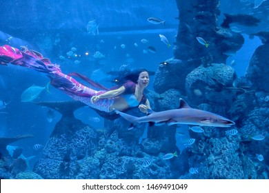 Mermaid is swimming with sharks and other fish at the Jakarta Aquarium, on July 27, 2019