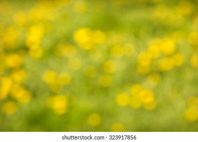 Merry beautiful vivid field of light lemon color blowballs out of focus, sunny springtime day farm countryside boke fond. Grassplot view with space for text on foliage