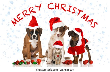 Merry Christmas Puppies.Merry Christmas Puppy Images Stock Photos Vectors