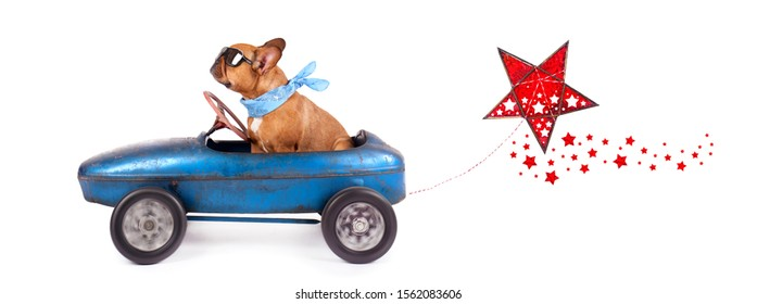merry christmas concept - cute french bulldog on a christmas road trip with pedal car