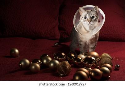 Merry christmas cute cat